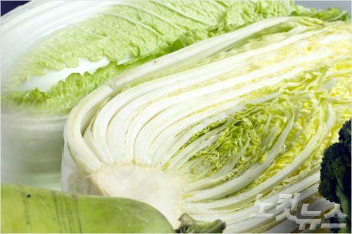 배추 (사진=스마트이미지 제공/자료사진)