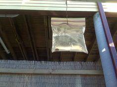 Faire fuir les mouches avec un sac en plastique rempli d'eau