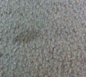 Main image for 'How to Clean Carpet Stains in a Snap'