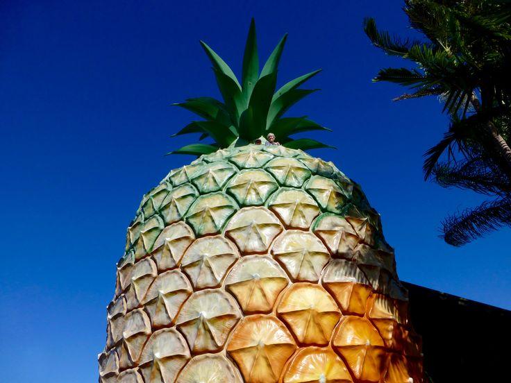 The Big Pineapple,Nambour.