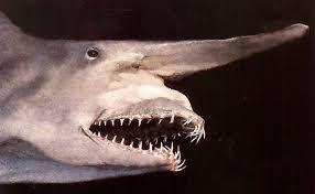 Tiburón duende rosado