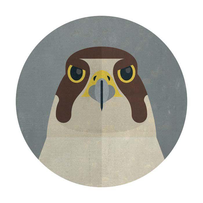 pigeon illo by Jan Sramek, illustrator represented by OWL Illustration Agency www.owlillustration.com