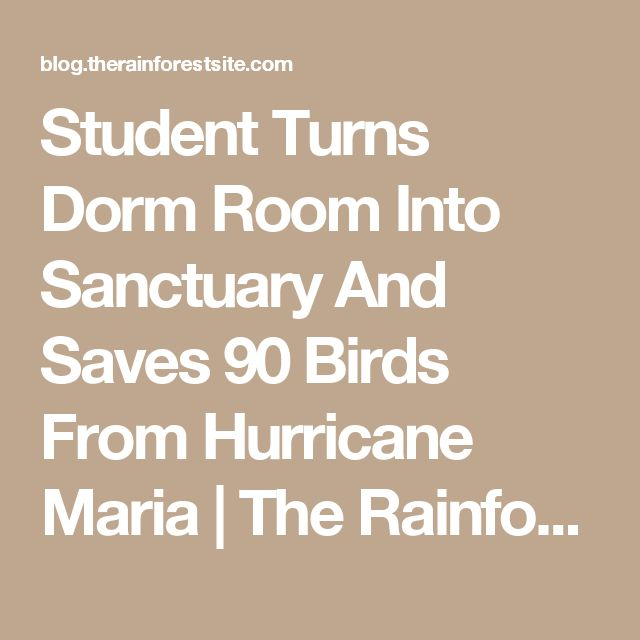 Student Turns Dorm Room Into Sanctuary And Saves 90 Birds From Hurricane Maria |  The Rainforest Site Blog