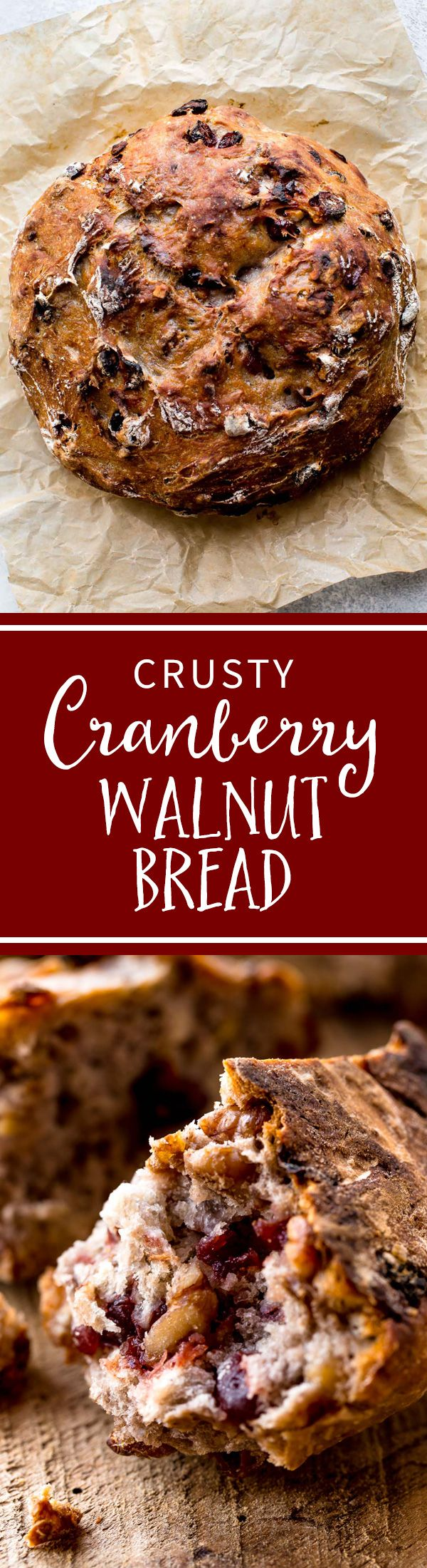 No-knead super crusty, soft, and EASY bread made in the dutch oven! Filled with dried cranberries and walnuts, the bread is delicious! Recipe on sallysbakingaddiction.com