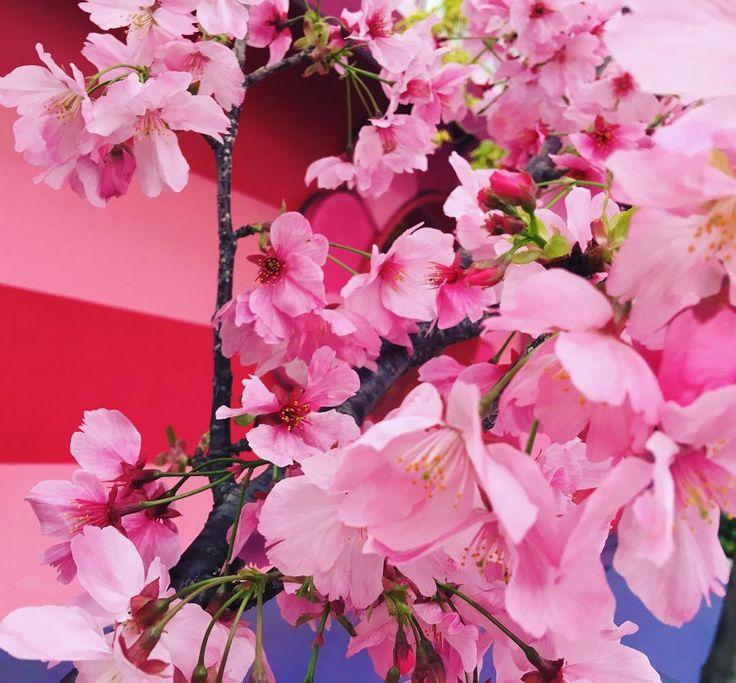 アーー可愛い配色 #ゆにば #春休み by ninagawamika