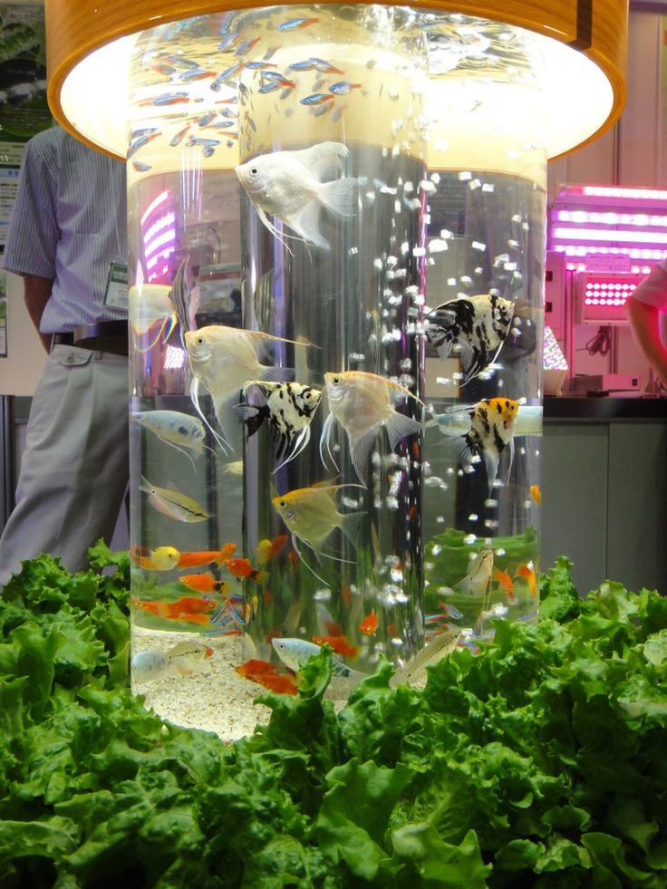 30 best aquaponics home garden images on pinterest for Fish tank hydroponic garden
