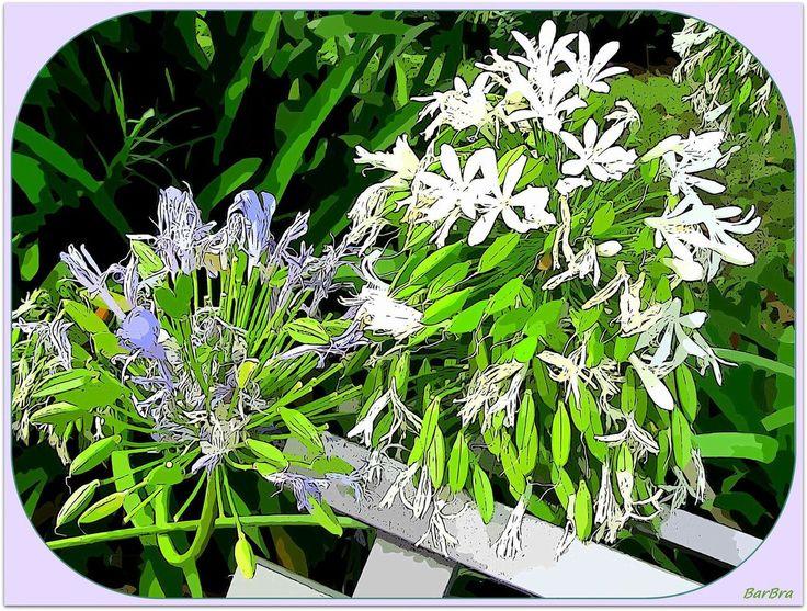 Romantiche immagini ... come in vecchie cartoline acquarellate http://ilmioblogdiprova.over-blog.it/2014/07/il-giardino-degli-agapanthus.html