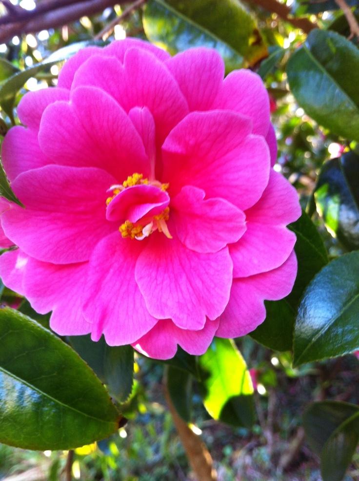 7 best flowers images on pinterest beautiful flowers - Paradise gardens roselle park nj ...