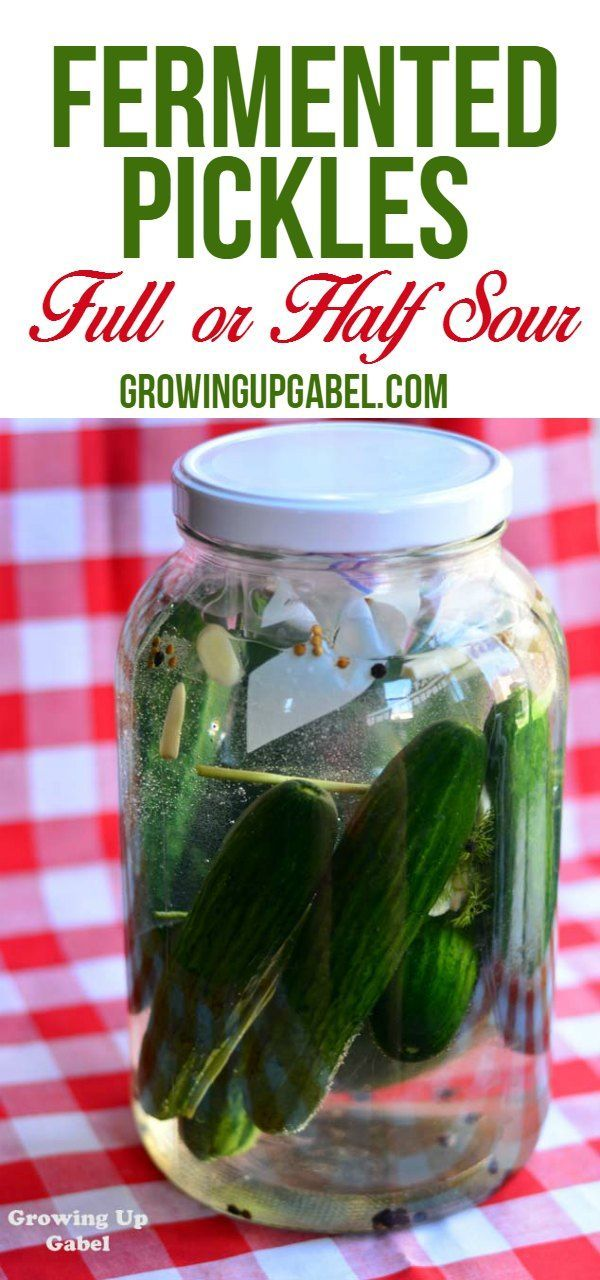 Make homemade fermented pickles in a glass jar. Ferment pickles for a week or more to make full sour or half sour pickles that taste just like Bubbies with this easy recipe.