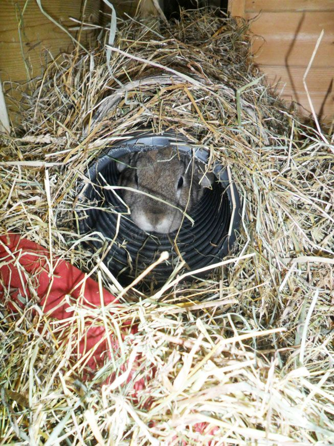 Bunnies love tunnels to play in and to hide in too.