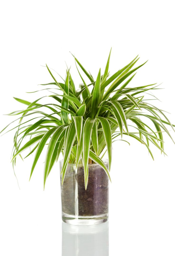 240 best images about krukv xter inomhus on pinterest plant pots ska and bulbs. Black Bedroom Furniture Sets. Home Design Ideas