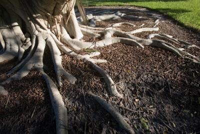 How to Landscape Around Tree Trunks & Roots