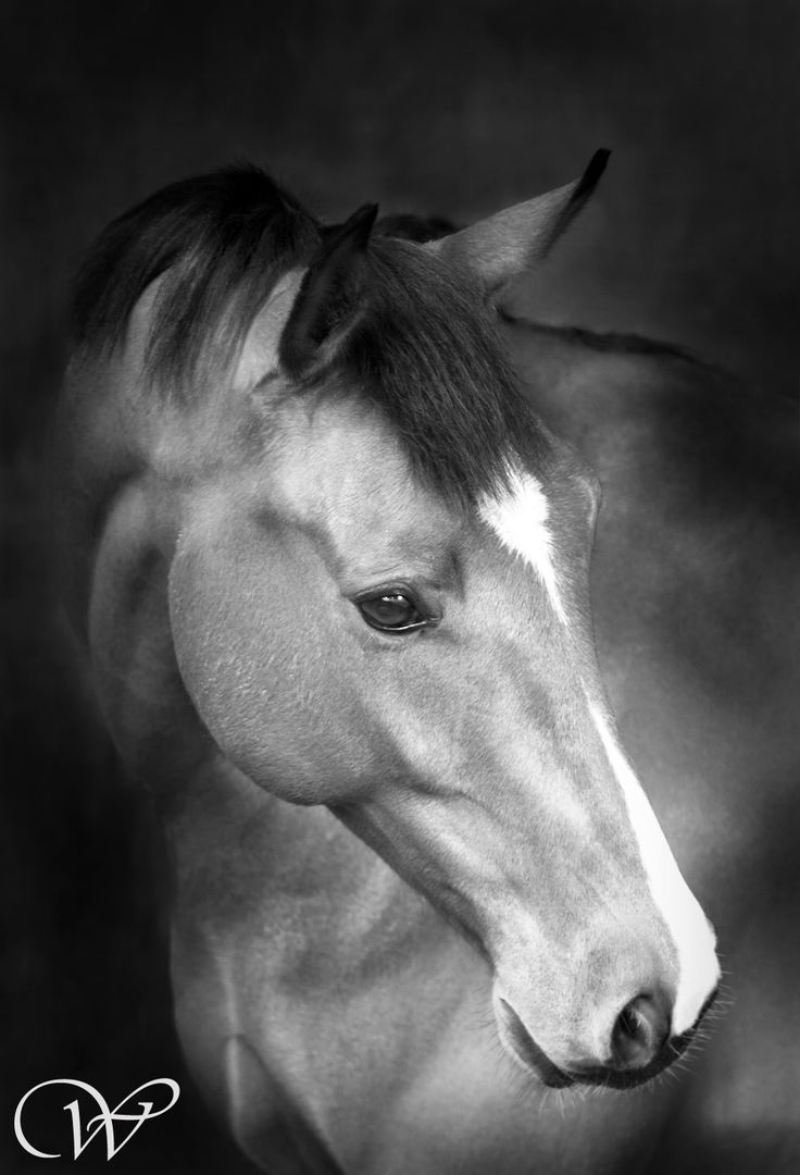 beatiful horse picture | Wildair Fine Art Equine Photography