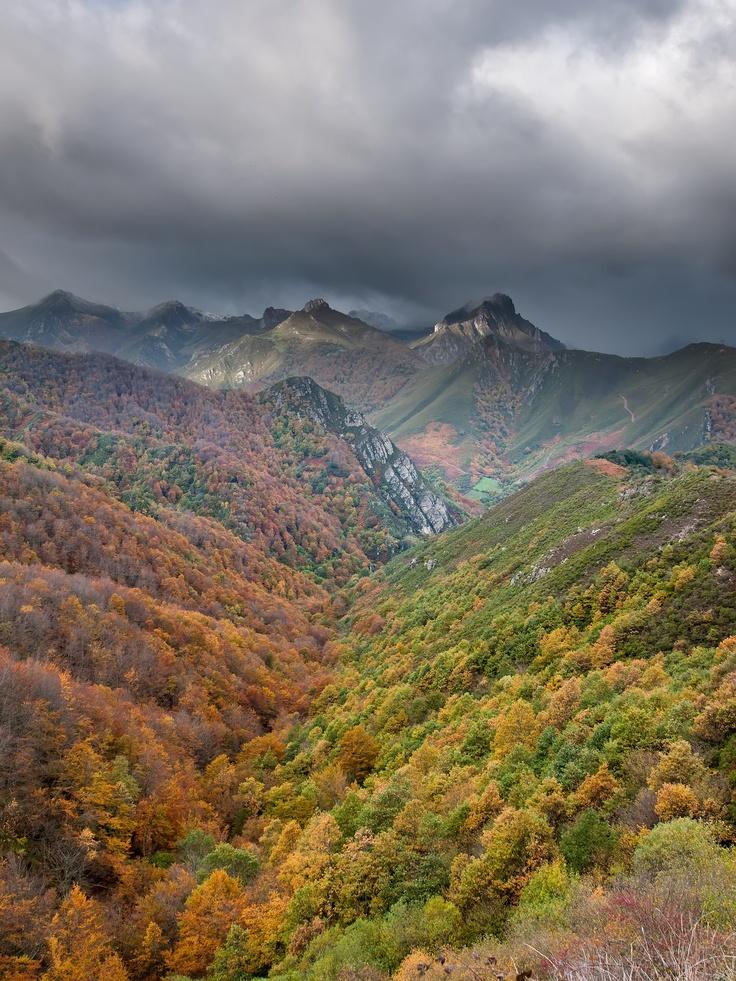 Bosque autóctono del municipio de Lena (Asturias-España) // Indigenous forest of the municipality of Lena (Asturias-Spain)