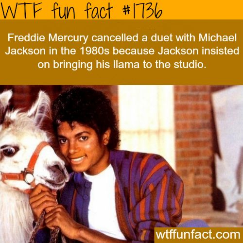 Freddie Mercury cancelled a duet with Michael Jackson in the 1980's because Jackson insisted on bringing his llama to the studio. HAHA!