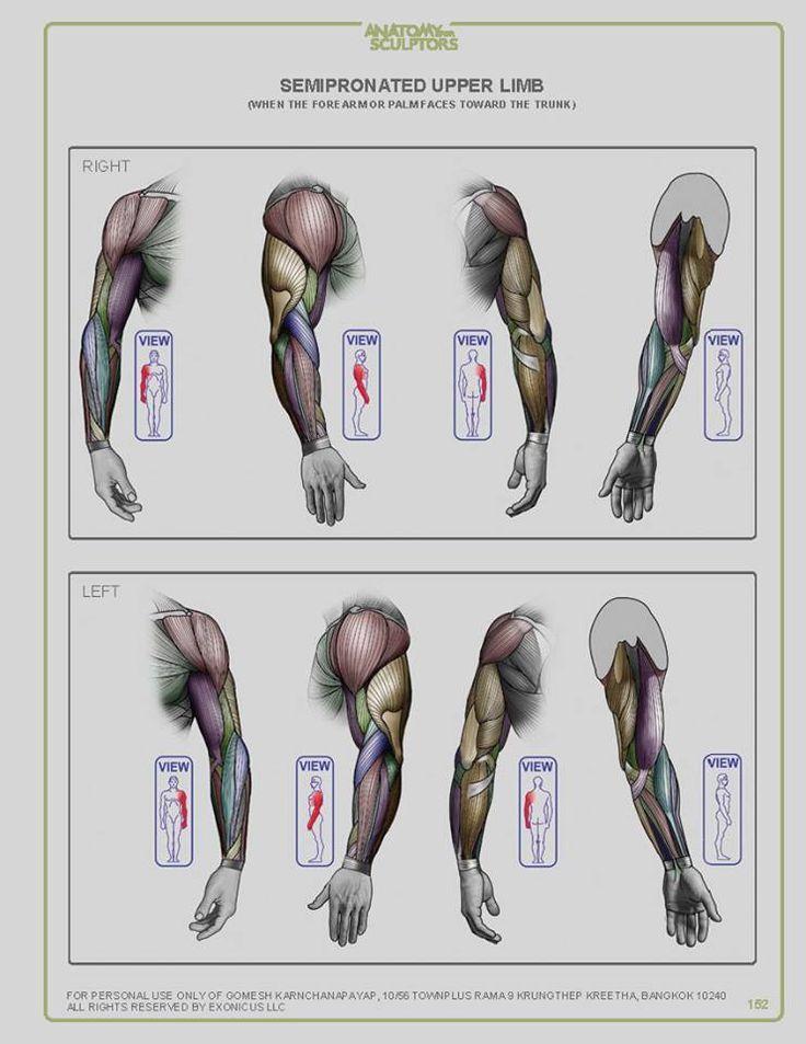 Groß Interaktive Anatomie Websites Fotos - Anatomie Ideen - finotti.info