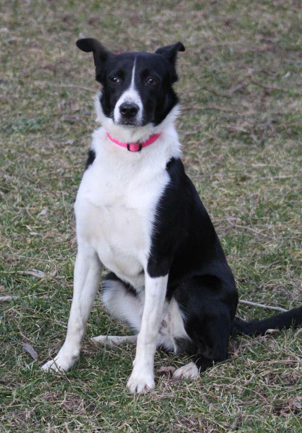 Dogs For Adoption Petfinder In 2020 Dog Adoption Adoption Pet Adoption