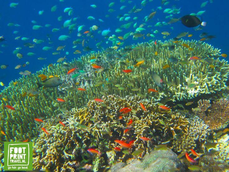 Menjangen eiland: alsof je in een aquarium zwemt.