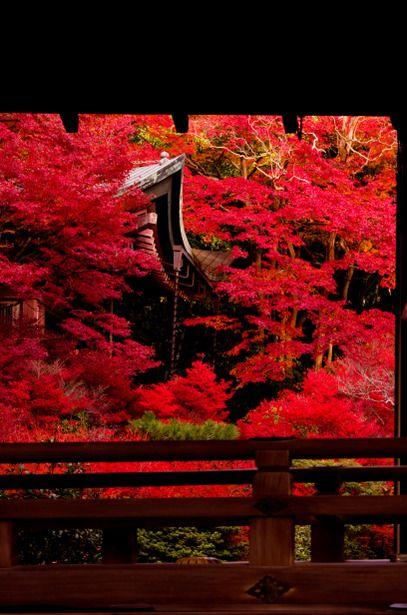 烈火の如し Raging fire, Bishamondo,Kyoto