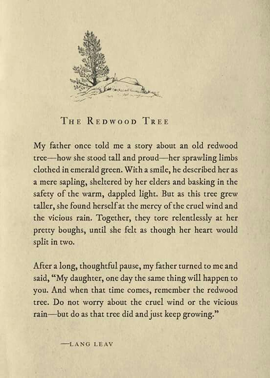 115 Best Images About Lang Leav On Pinterest Good Books