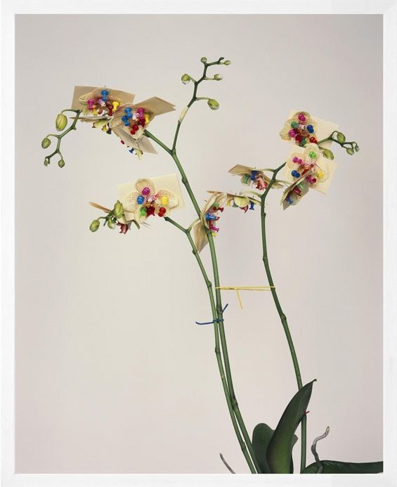 Pawel Bownik's Reconstructed Flowers