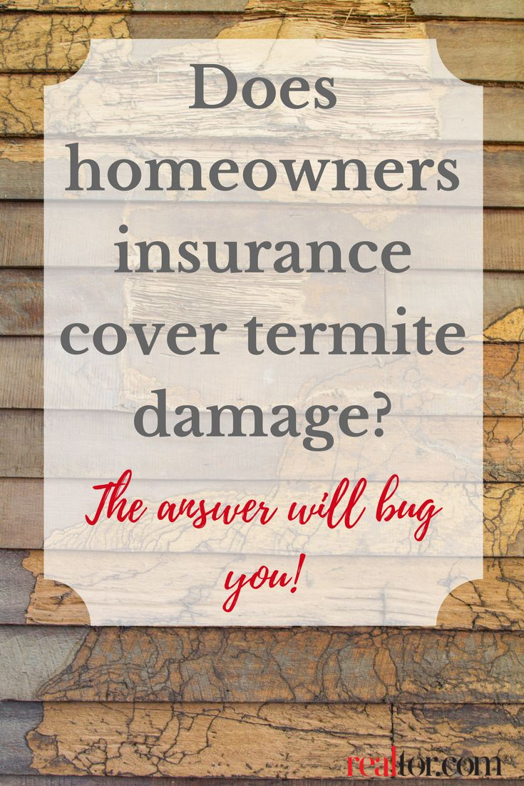 Does homeowners insurance cover termite damage the answer