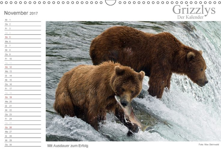 Grizzlybären - ein Fotoshooting in der Wildnis Alaskas. Grizzlybären in ihrer natürlichen Umgebung. Beeindruckende Fotos dieser Spezie aufgenommen in der Wildnis Alaskas.