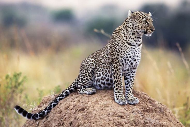 An Introduction to Africa's Big Five Safari Animals: