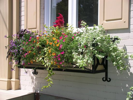Wrought iron window box with flowers