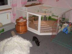 Mini Coelhos Baby: Habitação: Imagens para se inspirar