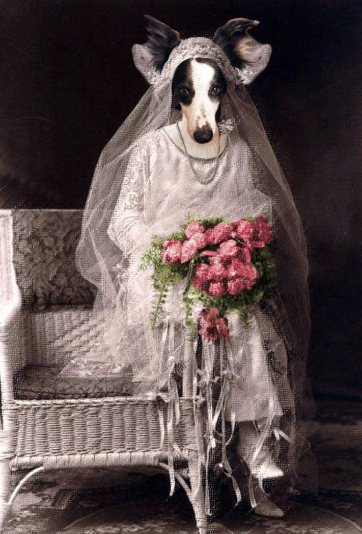 "The 1st version of ""Let's get married!"". Anthropomorphic digital dog art."