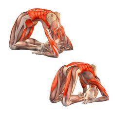 Pigeon pose - Kapotasana - Yoga Poses   YOGA.com
