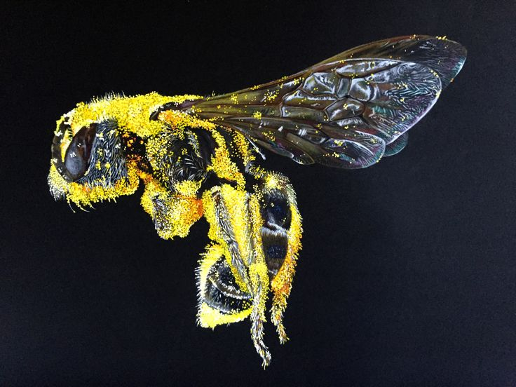 Bee Policromos y Acrílico Foto por: Sam Droege
