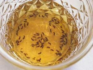 Gnat trap: 1/3 c apple cider vineagar/2 tsp water/ 1 drop dawn. Put together in container and place where gnats are a problem.