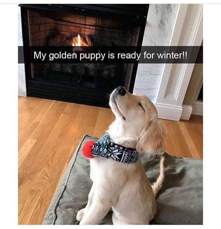 24 memes que solo son divertidos si tienes un perro CutesyPooh   – Süß