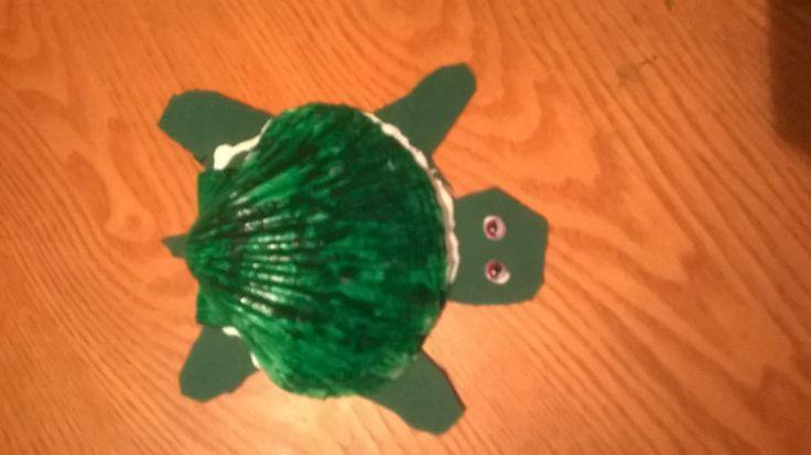 Simpukka kilpikonna
