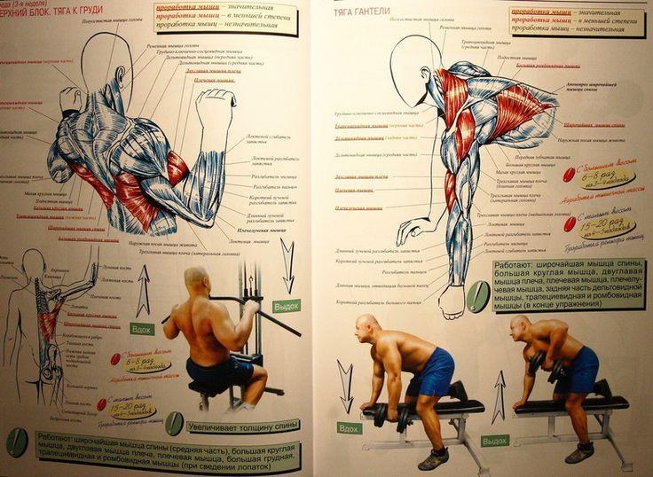 Атлетическая гимнастика - упражнения на мышцы спины IMG_9607