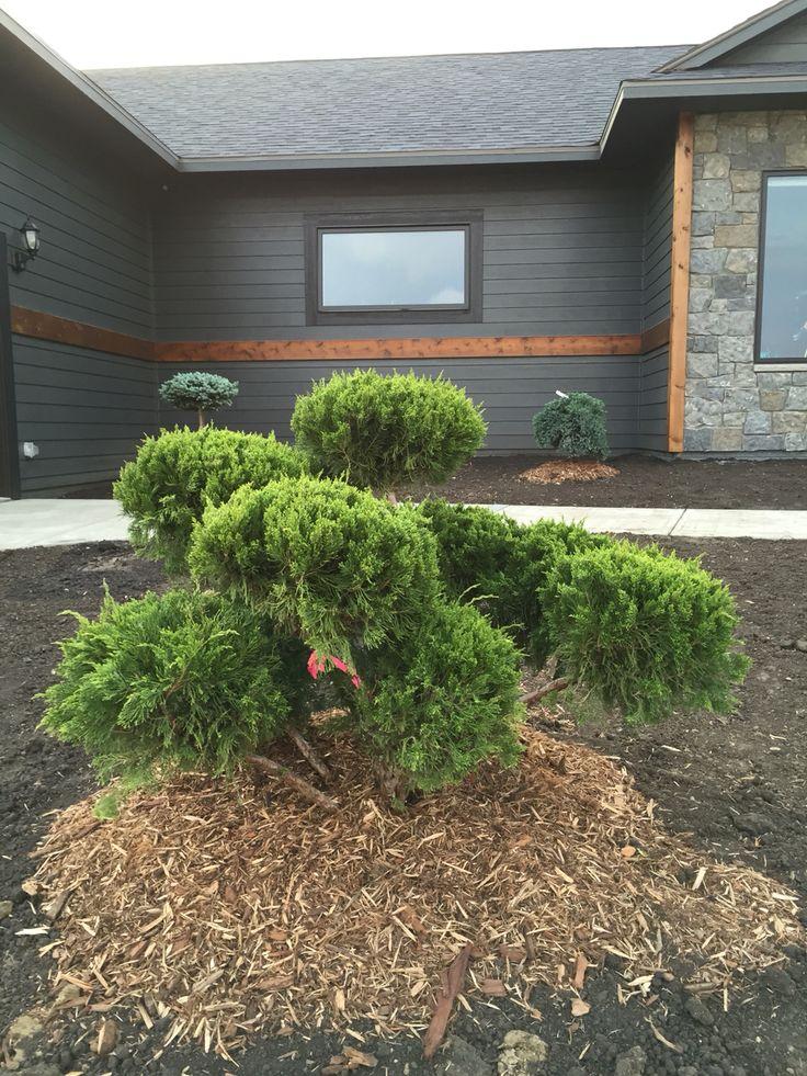 pom juniper. super cool landscaping