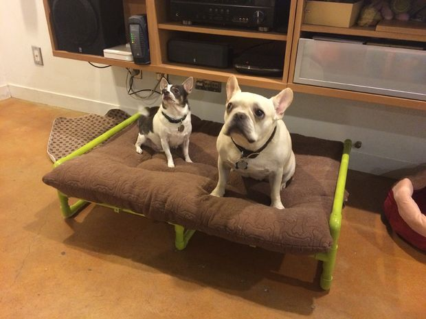 Pvc Pipe Raised Dog Bed Pictures Of Diy And Crafts And