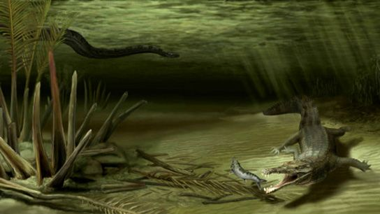 New ancient crocodile species discovered in Columbian mine.