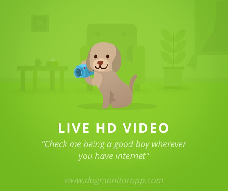 LIVE HD VIDEO: Watch HD video of your pet and see what they are up to.