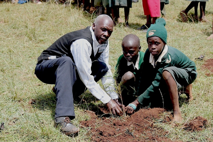 11 Curated Tree Planting Reforestation Projects