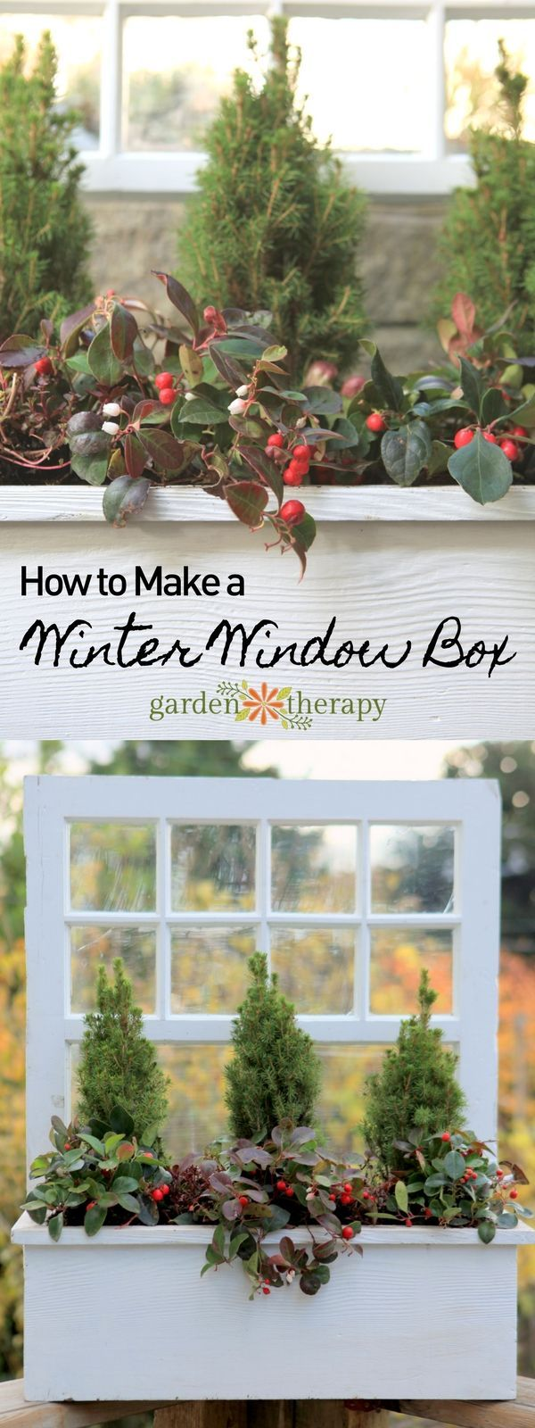 How to make a living winter window box and the best plants for a long lasting display.
