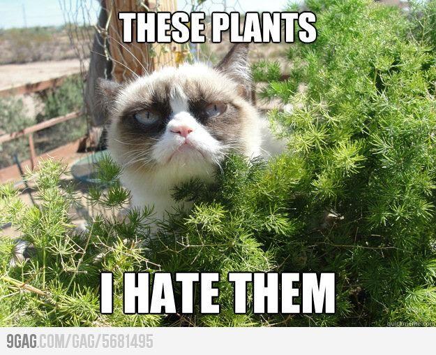 Grumpy cat goes outside.