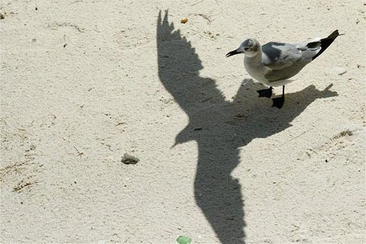 Flying Shadow. The 12 Most Awesome Shadow Illusions Ever Captured – BoredBug