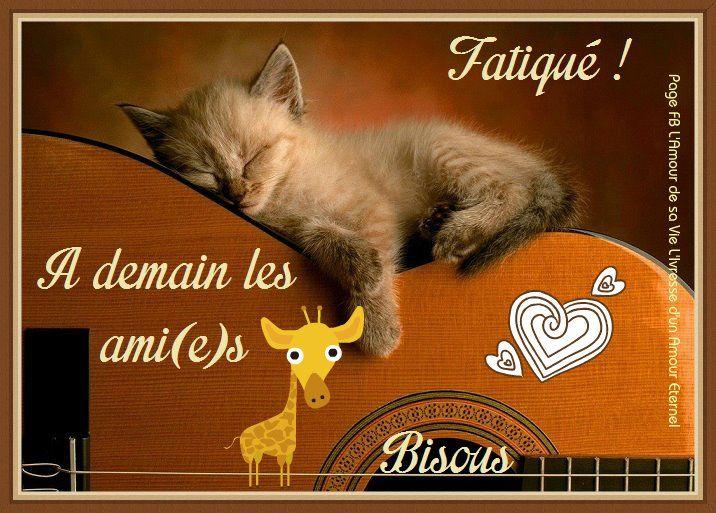 Fatigué ! À demain les ami(e)s, bisous #ademain chats chaton guitare fatigue sommeil dodo