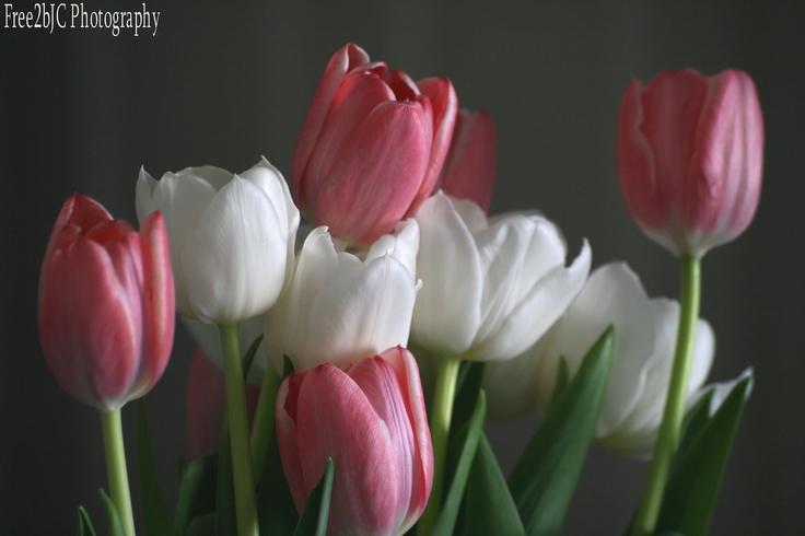 Friendship in bloom