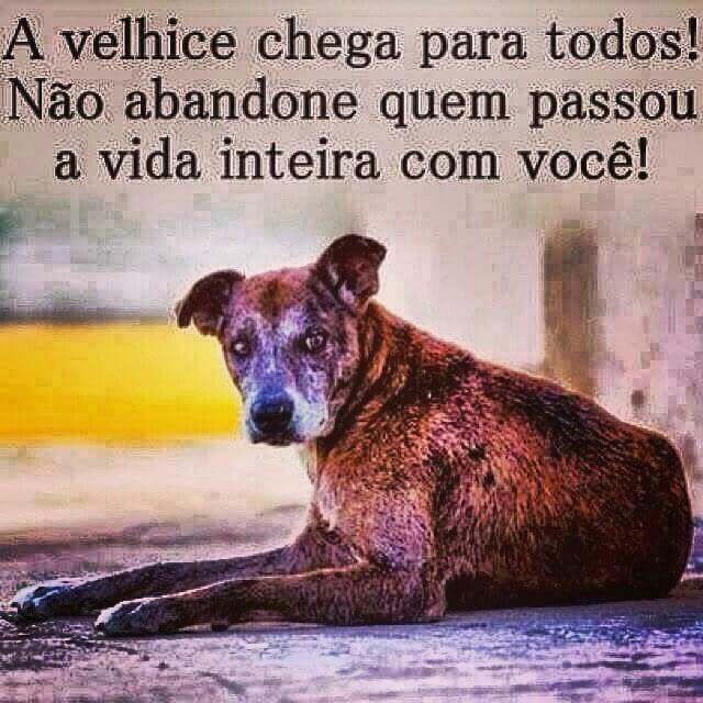 Por favor, mais respeito com todos os animais!! Não abandone, trate com amor e respeito!! <3 <3 <3