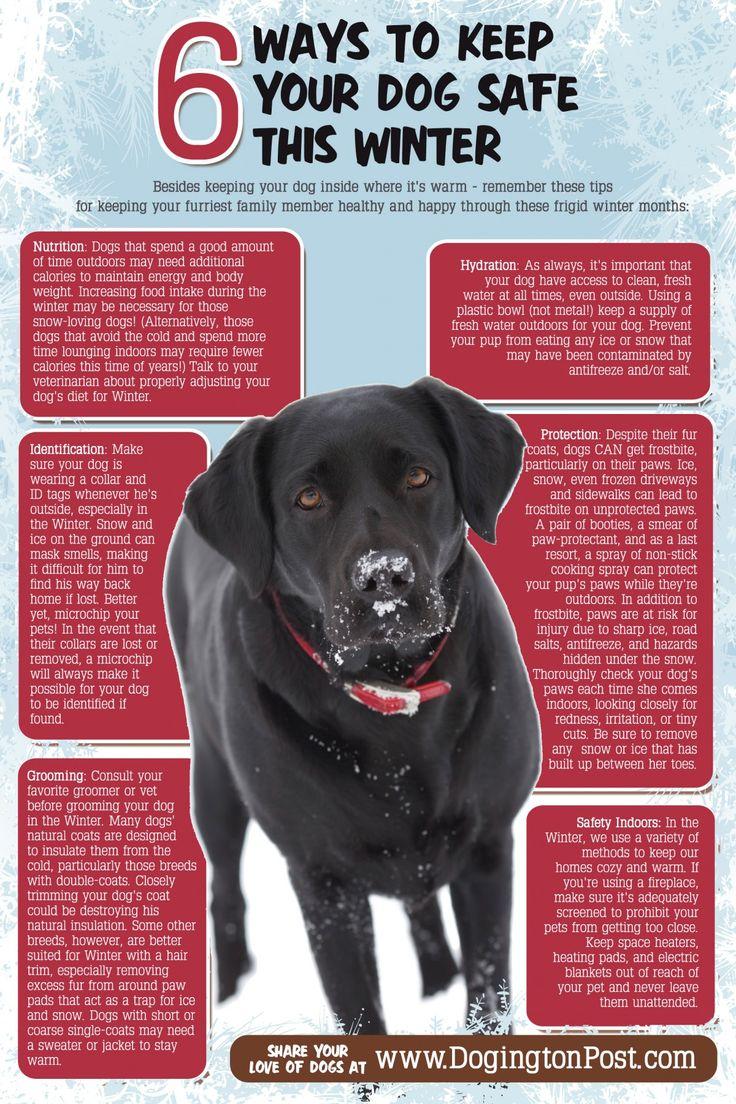 57 best Pet Care: Autumn \u0026 Winter images on Pinterest ...
