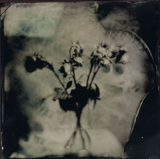Rose Heart, Artwork by Jeanne Wells